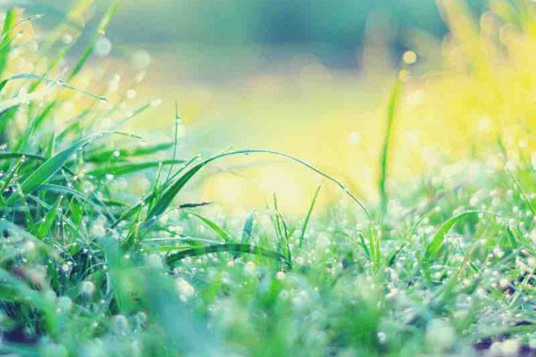 White Dew